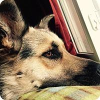 Adopt A Pet :: Ginny - Hamilton, MT