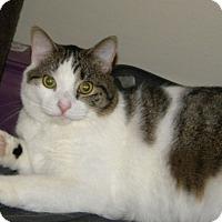 Adopt A Pet :: Liz - East Brunswick, NJ