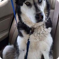 Adopt A Pet :: Bella - Scottsboro, AL