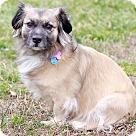 Adopt A Pet :: Maggie II