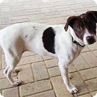 Adopt A Pet :: Drakey - Lawrenceville, GA