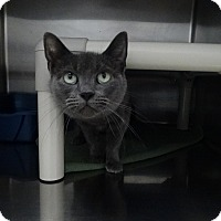 Adopt A Pet :: Simone - Elyria, OH