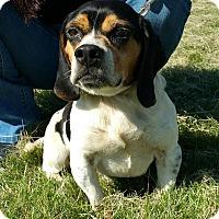 Adopt A Pet :: Boone - Lisbon, OH