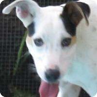 Adopt A Pet :: Tamra! Congeniality + - St Petersburg, FL