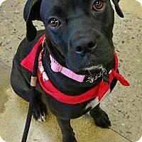 Adopt A Pet :: Raven - Tucson, AZ