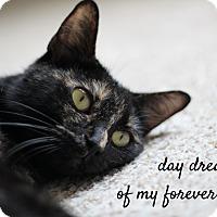 Adopt A Pet :: Maya (adoption pending) - Richmond, VA