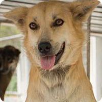 Adopt A Pet :: Gidget - Pickering, ON