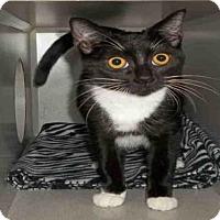 Adopt A Pet :: *RAMONA - Jackson, CA