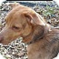 Adopt A Pet :: Blue - Foster, RI