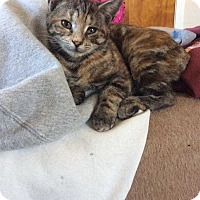Adopt A Pet :: Taffy - Central Islip, NY