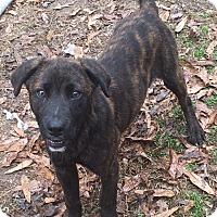 Adopt A Pet :: Emmitt - McKinney, TX