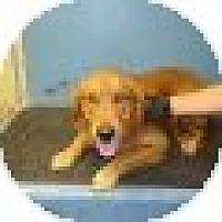 Adopt A Pet :: Noah - Denver, CO