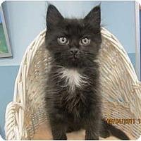 Adopt A Pet :: Joel - Sterling Hgts, MI