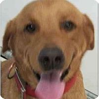 Adopt A Pet :: Obie - Alexandria, VA