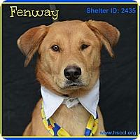 Adopt A Pet :: Fenway - Plano, TX