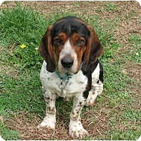 Adopt A Pet :: Seamus - Adopted! - Blairstown, NJ