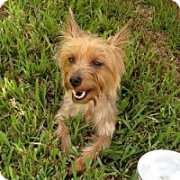 Adopt A Pet :: Willow - North Port, FL