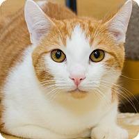 Adopt A Pet :: Hardy - Irvine, CA