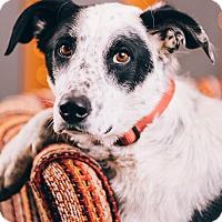 Adopt A Pet :: George Furrison - Portland, OR