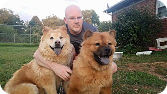 Chow Chow Mix Dog for adoption in Dix Hills, New York - Zayan