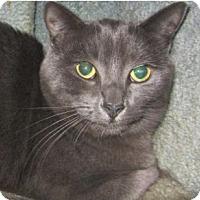 Adopt A Pet :: Heather - Kingston, WA