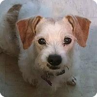 Adopt A Pet :: Eggbert - Lansing, MI