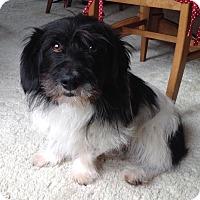 Adopt A Pet :: Monty - Mt. Prospect, IL