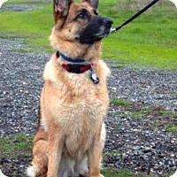 Adopt A Pet :: Leda - Pleasant Grove, CA
