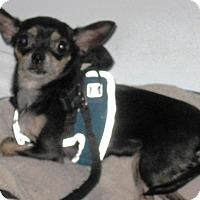 Adopt A Pet :: JEMINI - DeLand, FL