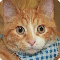 Adopt A Pet :: TRUCKER - Clayton, NJ