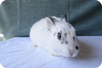 Other/Unknown Mix for adoption in Fountain Valley, California - Kati