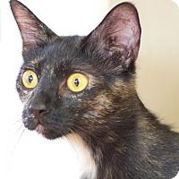 Adopt A Pet :: Galaxy - Homewood, AL