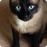 Adopt A Pet :: Roscoe - Pinckney, MI