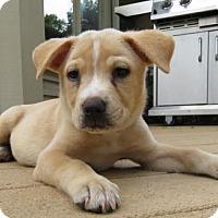 Adopt A Pet :: Sadie - Grafton, WI