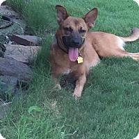 Adopt A Pet :: Faith - Nashua, NH