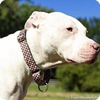 Adopt A Pet :: Angel - Framingham, MA
