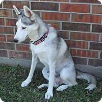 Husky Mix Dog for adoption in Friendswood, Texas - Mary
