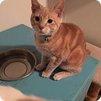 Adopt A Pet :: Whagaman - Hanna City, IL