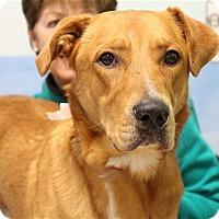 Adopt A Pet :: Rowan - Elyria, OH