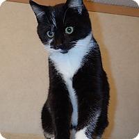 Adopt A Pet :: Bill - North Wilkesboro, NC