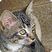 Adopt A Pet :: Sid - Ruidoso, NM