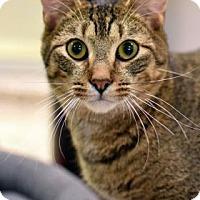 Adopt A Pet :: Amaranth - Aiken, SC