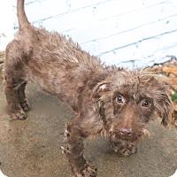 Adopt A Pet :: Eccles - Allentown, PA