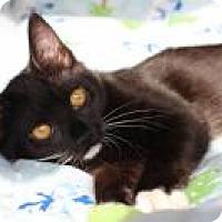 Adopt A Pet :: Wilma - San Carlos, CA