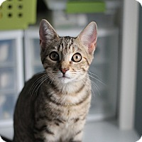 Adopt A Pet :: Oci - Richmond, VA