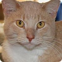 Adopt A Pet :: Reno - Savannah, MO
