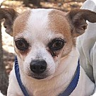 Adopt A Pet :: Artie