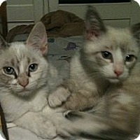 Adopt A Pet :: PATRICK - san Antonio, TX