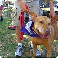 Adopt A Pet :: Sandy - Sherman Oaks, CA