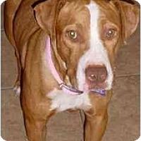 Adopt A Pet :: Kallan - Gilbert, AZ